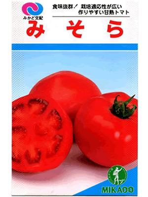 トマトらしい味 トマト 新作送料無料 みかど交配 SALENEW大人気 種のことならお任せグリーンデポ みそら みかど育種農場の大玉トマトです