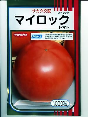 トマト サカタ交配・・・王様トマトマイロック・・・<サカタの大玉トマトです。 種のことならお任せグリーンデポ>