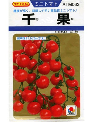 It is a cherry tomato varieties tomato seeds takii crossed 1000 fruit takii  seed  If you're the kind of thing you leave green Depot >