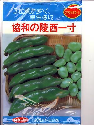 そら豆の種 陵西一寸 みかど協和の一寸そら豆品種です。