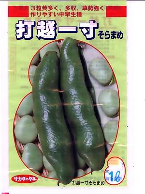 そら豆の種 サカタのタネ・・・打越一寸・・・<サカタのそら豆です。種のことならお任せグリーンデポ>