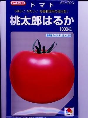 トマトの種 タキイ交配・・・CF桃太郎はるか・・・<タキイのトマトの種です。種のことならお任せグリーンデポ>