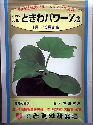 キュウリの台木用南瓜 ときわ交配・・・ときわパワーZ2・・・<ときわのキュウリの台木です。種のことならお任せグリーンデポ>