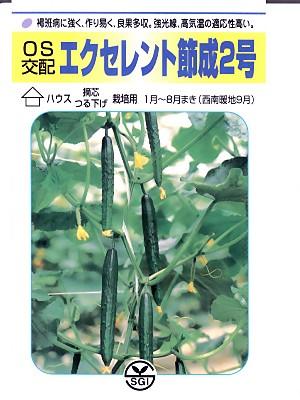 キュウリの種 OS交配・・・エクセレント節成2号・・・<埼玉原種育成会のキュウリ種子です。>