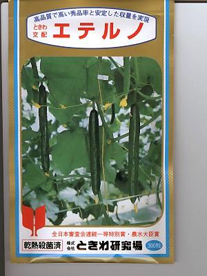 キュウリの種 ときわ交配 エテルノ ときわ研究所のキュウリ品種です。種のことならお任せグリーンデポ
