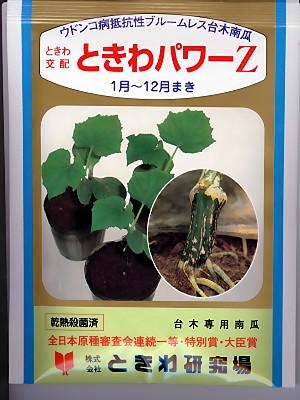 キュウリの台木 ときわ交配・・・ときわパワーZ・・・<ときわのキュウリの台木用カボチャ種子です。>