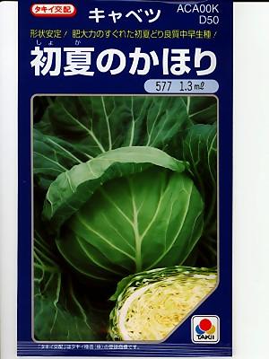 肥大性に優れた美味しいキャベツ品種 タキイ交配 初夏のかほり 種のことならグリーンデポ お洒落 AL完売しました。 タキイのキャベツ種子です