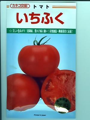 カネコ交配 いちふく  カネコ種苗のトマト品種です。