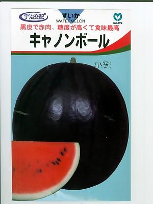 宇治交配 キャノンボールスイカ(200粒) <丸種の大玉スイカ品種です。種の通販ならグリーンデポ>