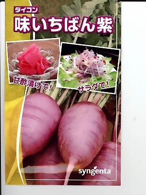 ご注文で当日配送 味いちばん紫ダイコン種 贈り物 シンジェンタシードのダイコン種子です