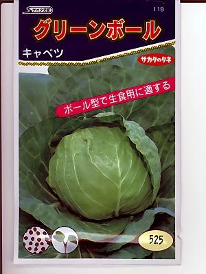 グリーンボール サカタのタネのボール型キャベツ種です 種のことならグリーンデポ 安い 激安 プチプラ 限定価格セール 高品質