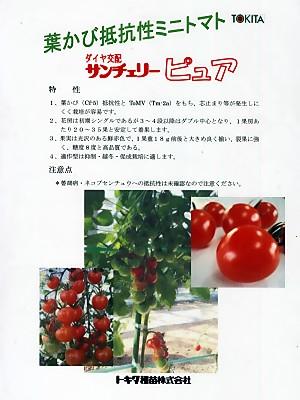 ミニトマト種 ダイヤ交配 サンチェリーピュワ <トキタ種苗のミニトマト種です。種の通販ならグリーンデポ>