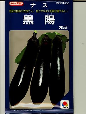 タキイ交配 黒陽ナス  タキイの長ナス品種です。