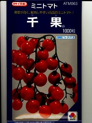 タキイ交配 千果 1000粒規格です タキイのミニトマト種子 ラッピング無料 結婚祝い