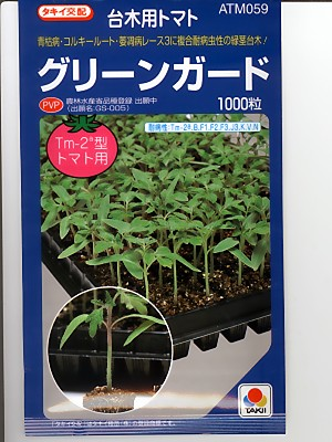 It is the tomato stock seed of the Takii mating green guard Takii seed and sapling.