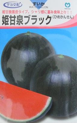 小玉西瓜種 宇治交配 姫甘泉ブラックスイカ  丸種株式会社の黒皮の小玉西瓜品種です。