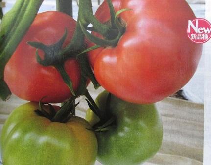 ダイヤ交配 豊作祈願015トマト トキタ種苗の大玉トマト品種(1000粒入り)