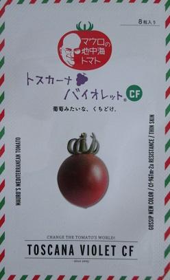 トスカーナバイオレットCF  パイオニアエコサイエンスのミニトマト品種 種1000粒入り