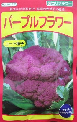 武蔵野交配 パープルフラワー コート1000粒  武蔵野種苗のカリフラワー品種です。