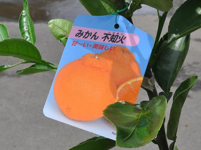 橙子/磷火15cm暖水瓶