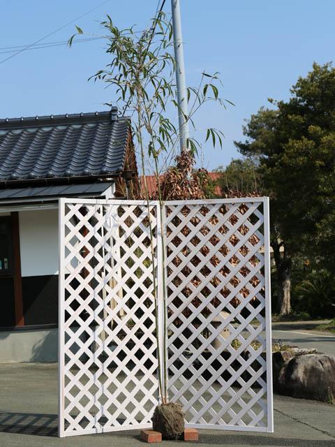 タケ/メダケ 2.3m露地 2本セット【1年間枯れ保証】【竹類】【配達指定不可/大型商品】
