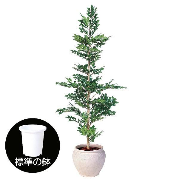 人工観葉植物 全高1.8m マサカキ サカキ ホンサカキ 人工樹木 造花 花材 インテリアグリーン フェイクグリーン オブジェ ディスプレイ 装飾