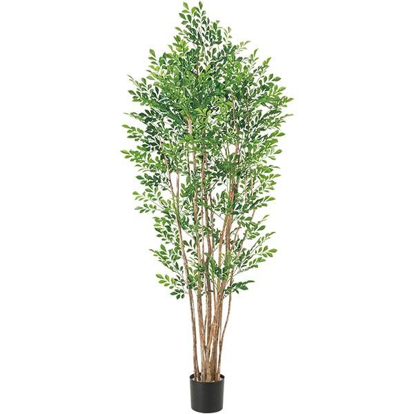 人工観葉植物 全高1.7m トネリコ シマトネリコ 人工樹木 造花 リーフ インテリアグリーン フェイクグリーン オブジェ ディスプレイ 装飾