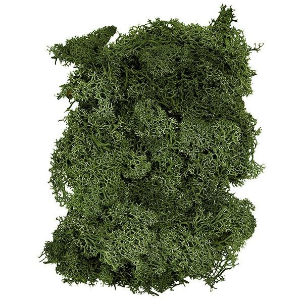 プリザーブドフラワー フィンランドモス モスグリーン 特大袋 1kg モス 苔 こけ コケ グリーン材 花材 天然素材 自然素材 フラワーアレンジメント ディスプレイ 装飾