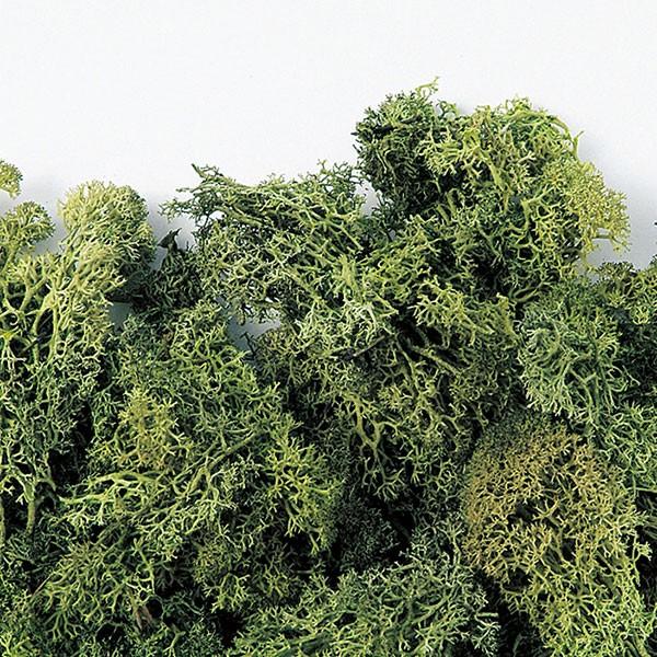 プリザーブドフラワー・フィンランドモス・アンティークグリーン・特大袋・1kg(モス/苔/こけ/コケ)(グリーン材/花材)(天然素材/自然素材)(フラワーアレンジメント/ディスプレイ/装飾)