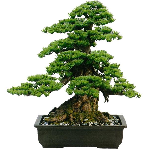 楽天市場】【人工植物】全高60cm...
