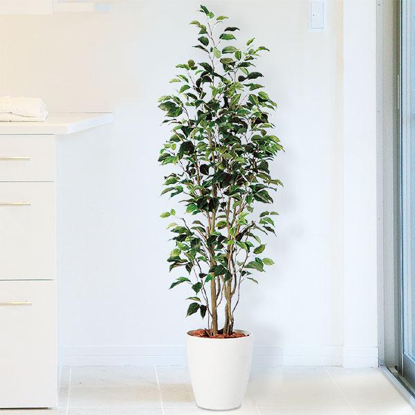 人工観葉植物 全高1.5m フィカス ベンジャミン ホワイト鉢 人工樹木 造花 フェイクグリーン インテリアグリーン オブジェ FSTフリースタイルトランク