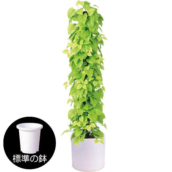 人工観葉植物 全高1.5m ライムポトス タワー ヘゴ オウゴンカズラ 人工樹木 造花 葉材 リーフ フェイクグリーン インテリアグリーン オブジェ ディスプレイ 装飾