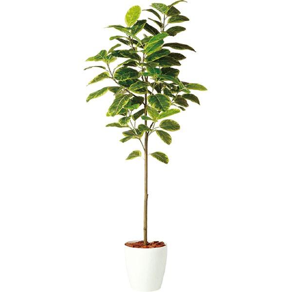 速くおよび自由な 人工観葉植物 全高2.0m 造花 フィカス アルテシマ ホワイト鉢 全高2.0m 人工観葉植物 FST アルティッシマ 人工樹木 造花 花材 リーフ 葉材 インテリアグリーン フェイクグリーン オブジェ ディスプレイ ディスプレー 装飾, オックスフォードタイム:beaf7ed6 --- bellsrenovation.com