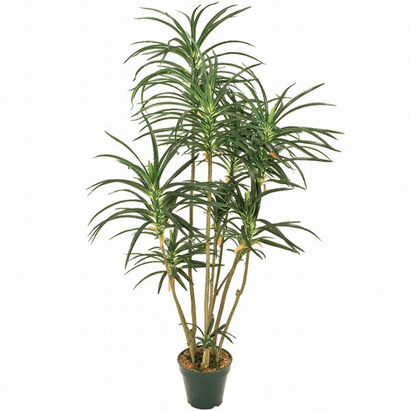人工観葉植物 全高90cm ドラセナ ユッカ 青年の木 エレファンティペス 人工樹木 造花 フェイクグリーン インテリアグリーン オブジェ ディスプレイ 装飾