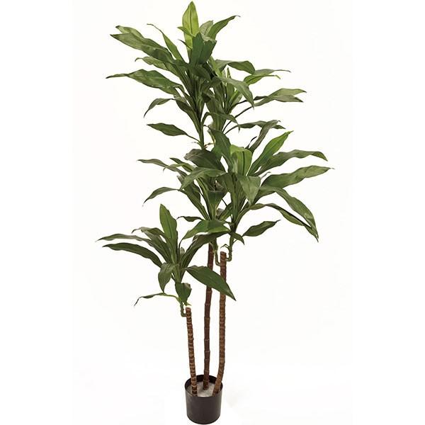人工観葉植物 全高1.3m ドラセナ フレグランス 幸福の木 マッサン フラグランス ニオイセンネンボク 人工樹木 造花 フェイクグリーン インテリアグリーン オブジェ ディスプレイ 装飾