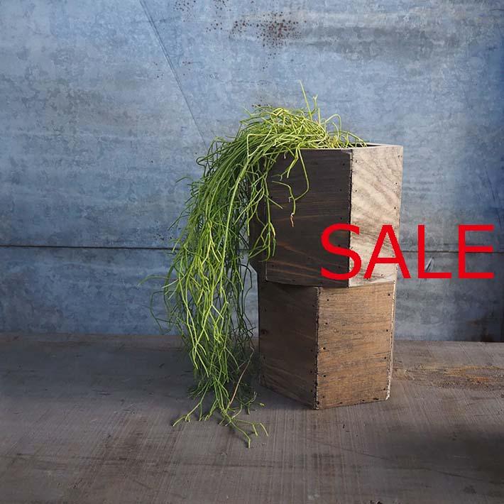 MUIRWOODS 40% OFF ミューアウッズ 六角 Seasonal Wrap入荷 全商品オープニング価格 大