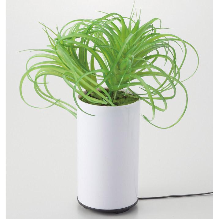 グリーンディフューザー C アロマ 芳香器 加湿 植物型 インテリア 噴霧器 空焚き防止機能 LED 癒し