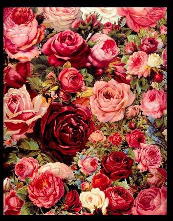 ししゅう糸 DMC糸 クロスステッチ刺繍キット 布地に図柄印刷 薔薇園