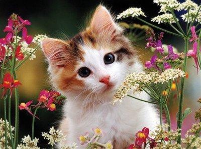 ししゅう糸 DMC糸 クロスステッチ刺繍キット 布地に図柄印刷 小花子猫
