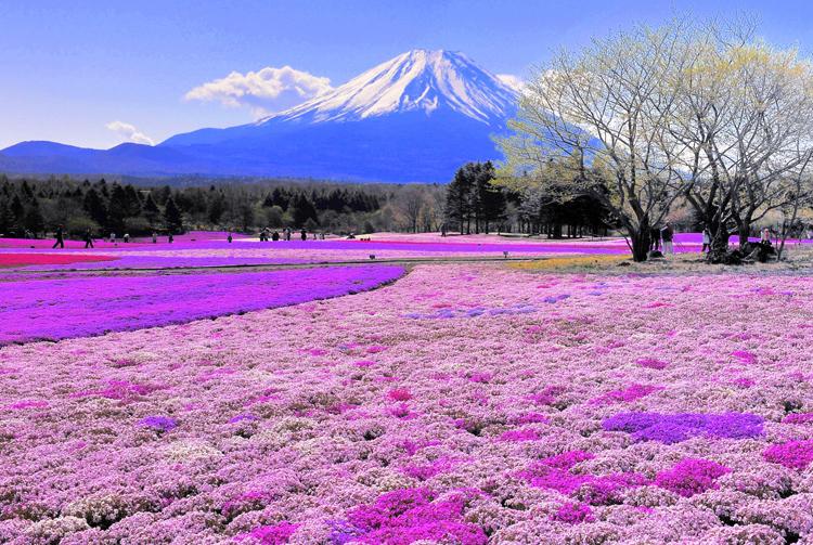 ししゅう糸 DMC糸 クロスステッチ刺繍キット 布地に図柄印刷 富士山 (B) …