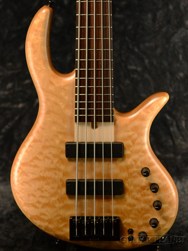Elrick Gold Series E-volution 5 -Quilted Maple Top/Mahogany Back- 新品[エルリック][ゴールドシリーズ][エボリューション][5Strings,5弦][Electric Bass,エレキベース]
