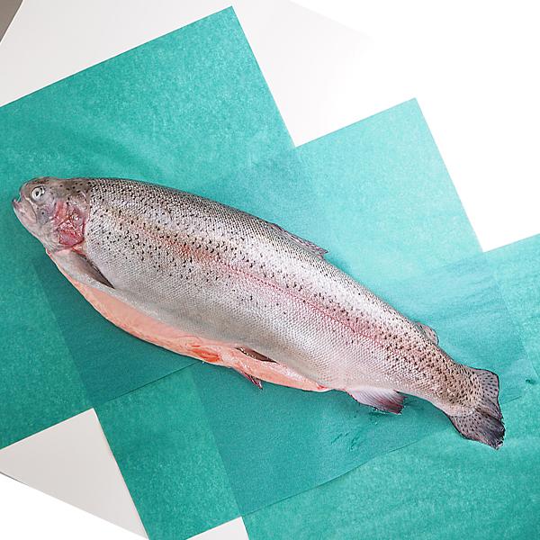 霜降り肉質、とろける食感、「海の和牛」と呼ばれてます タスマニア オーシャントラウト セミドレス 約3.5kg 冷蔵便 [トラウトサーモン,鮭,セミドレス]