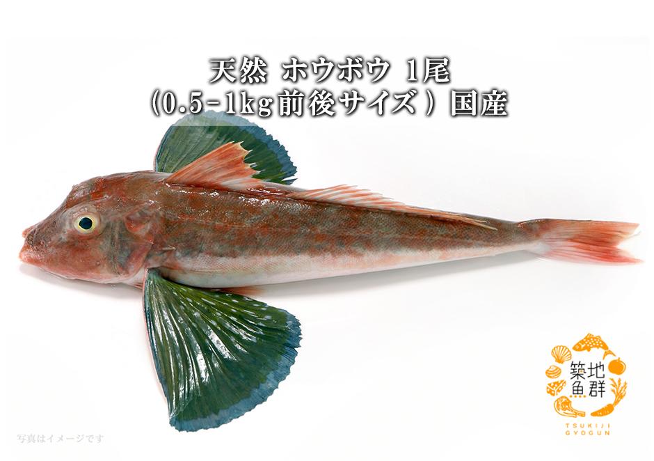 ホウボウ 魚の