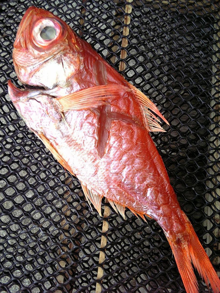 高級魚だよ 売れ筋 キンメ 金目鯛 のクサヤ切り身 お届け品は切り身です 70%OFFアウトレット 真空パック画像はイメージです 金目鯛のクサヤの干物