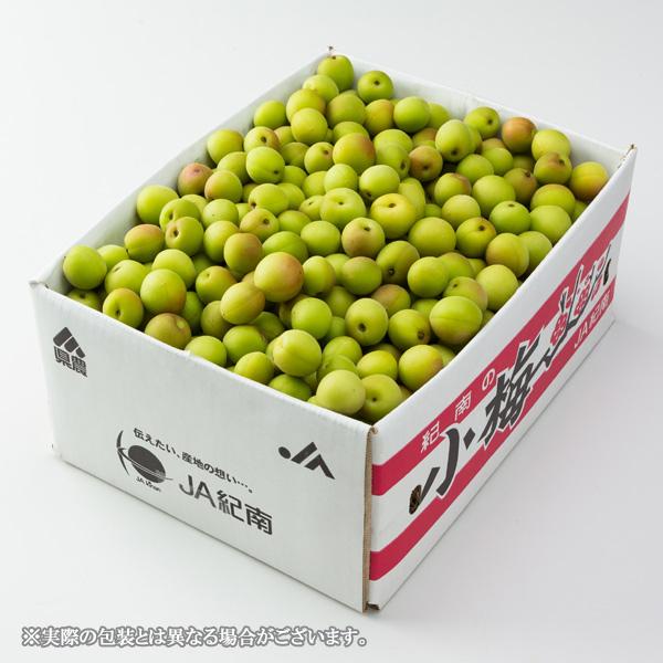 紀州小梅 白王 和歌山県産 JA紀南   秀品  2Lサイズ  約2kg   梅干し用 レシピ付き 青梅 うめ ウメ