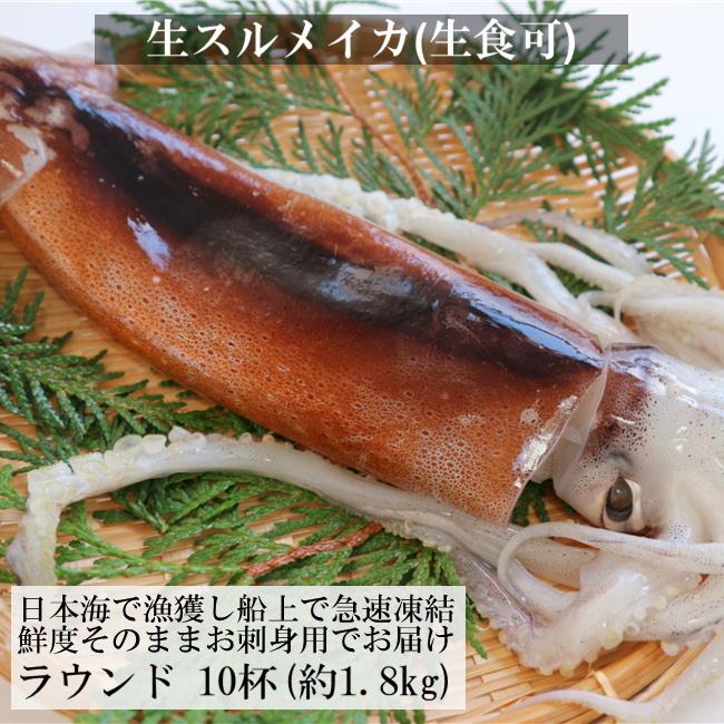 送料無料 獲れたてを船上冷凍 生食可の新鮮するめいか 日本海産 するめいか 真いか 人気海外一番 生食用 中型 烏賊 イカ いか サイズ 1.8kg前後 スルメイカ 大決算セール 刺身 10杯