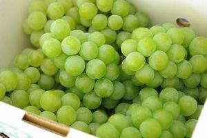 完熟ナイアガラ葡萄通販 優先配送 芳醇な香りの山形ぶどうを販売 約2kg 大人気 5~9房 山形産