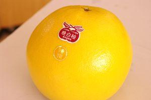 晩白柚(ばんぺいゆ)通信販売 熊本県八代産の特大柑橘を販売取寄。2玉 熊本産