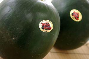 種なし西瓜通信販売 ブラックジャックスイカの販売。皮が黒色で果肉は赤色。お中元に 千葉・他産地 2玉