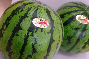 植木西瓜通信販売 熊本県植木町産スイカを販売。果物ギフトに L~4L 2玉